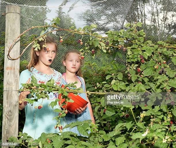 Two sisters picking blackberries