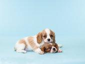 Two Sleepy Puppies