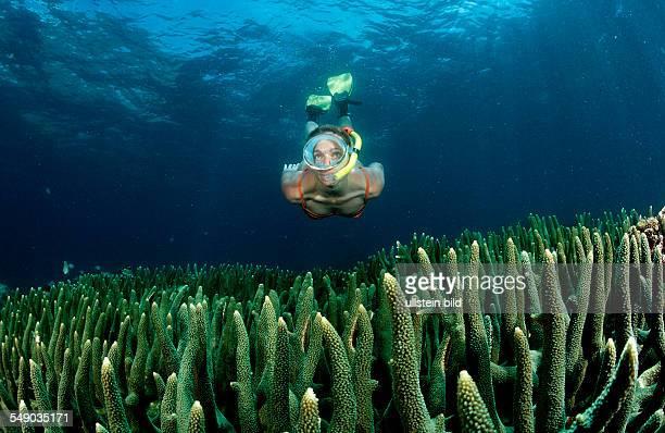 Two snorkeling girls Bali Indian Ocean Indonesia