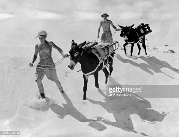Two soldiers belonging to the Commonwealth and Allied forces lead their donkeys as they walk in the Egyptian desert in October 1942 near the...