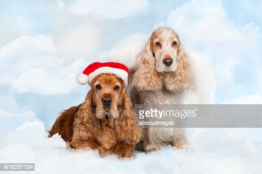 two spaniel dogs with santa hat : Foto de stock