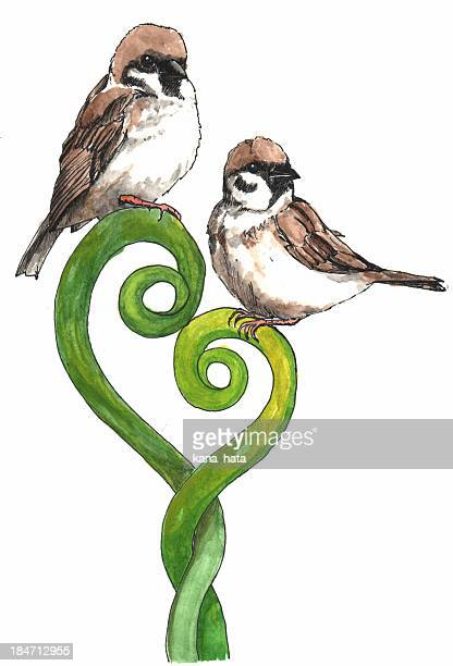 Two Sparrows watercolor illustration