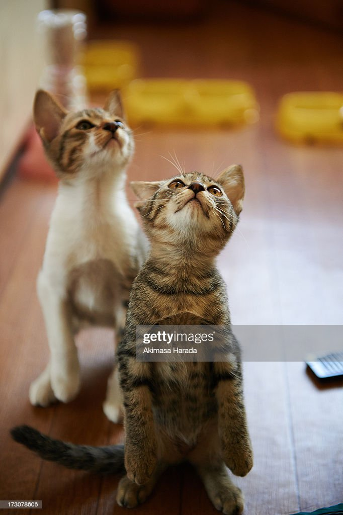 Two standing kittens. : Stock Photo