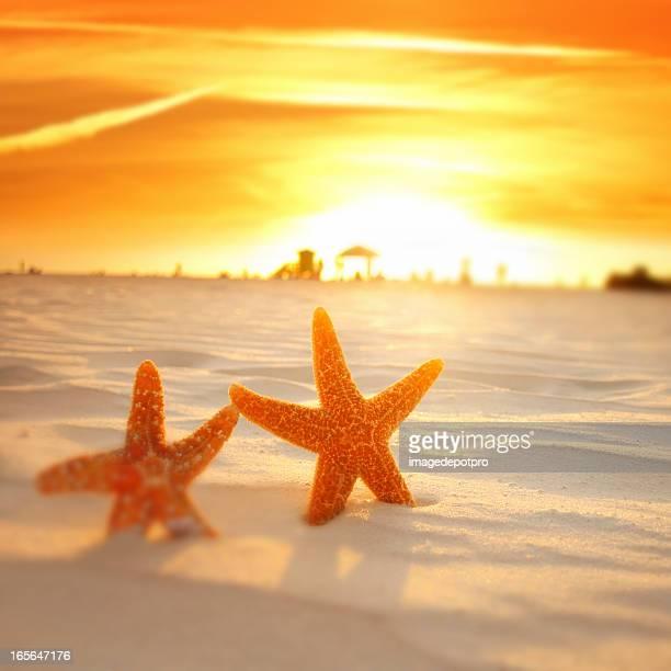 two starfish on beach over sunset