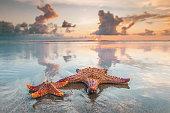 Two starfish on sea beach at sunset, Bali, Seminyak, Double six beach