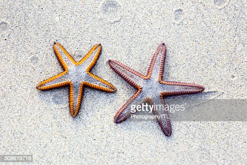 Two starfish on sand background on a beach. : Stock Photo
