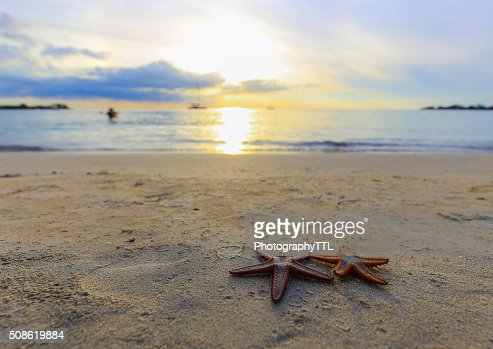 Two starfish on the beach at sunset, a romantic metaphore. : Stock Photo