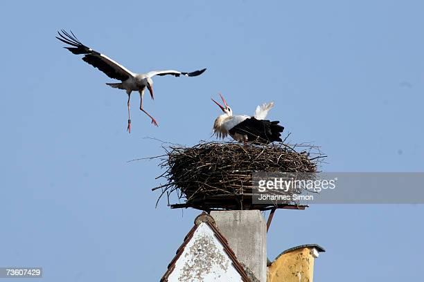 Two storks prepare a nest on the chimney of Sweden Port of Rennertshofen on March 16 2007 near Ingolstadt Germany The Bavarian storks in the upper...