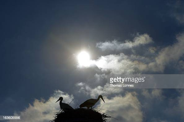 Two storks sit in there nest near Biebesheim at Rhine on March 13 2013 in Frankfurt am Main Germany Snow blanketed much of Europe canceling hundreds...
