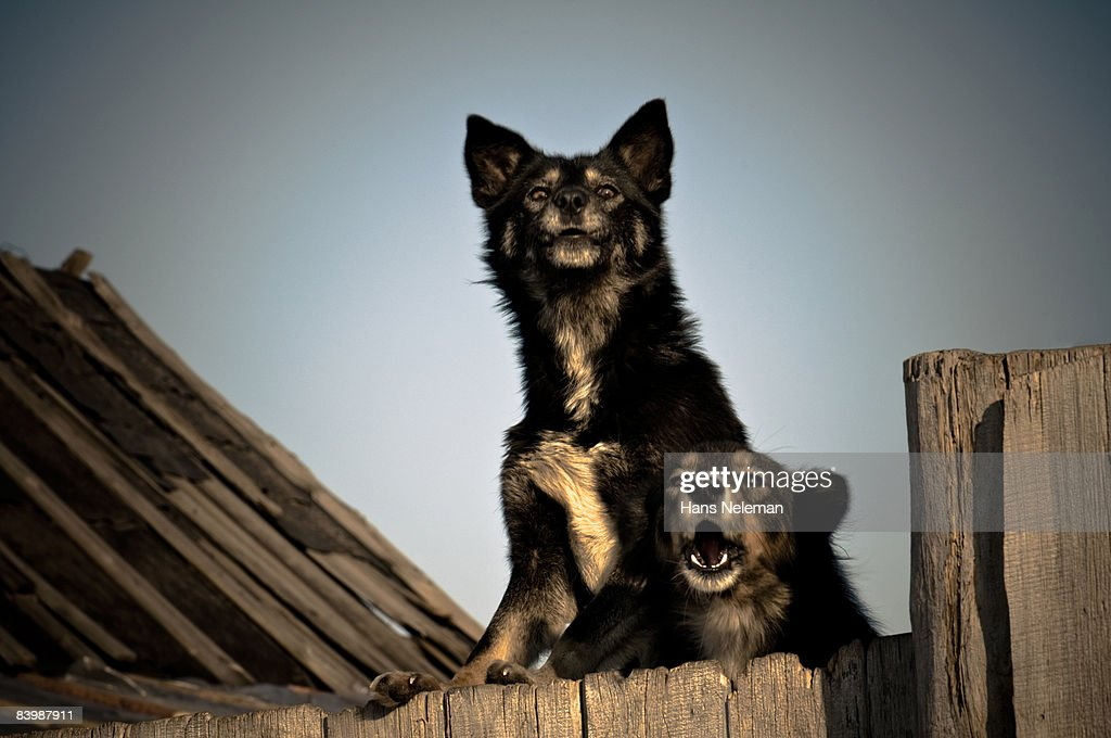 Two stray dogs protecting a junk yard : Stock Photo