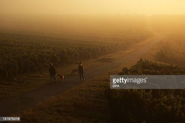 Two strollers walk past vineyards as dawn breaks on September 14 2012 near Essenheim western Germany Meteorologists forecast sunshine and...