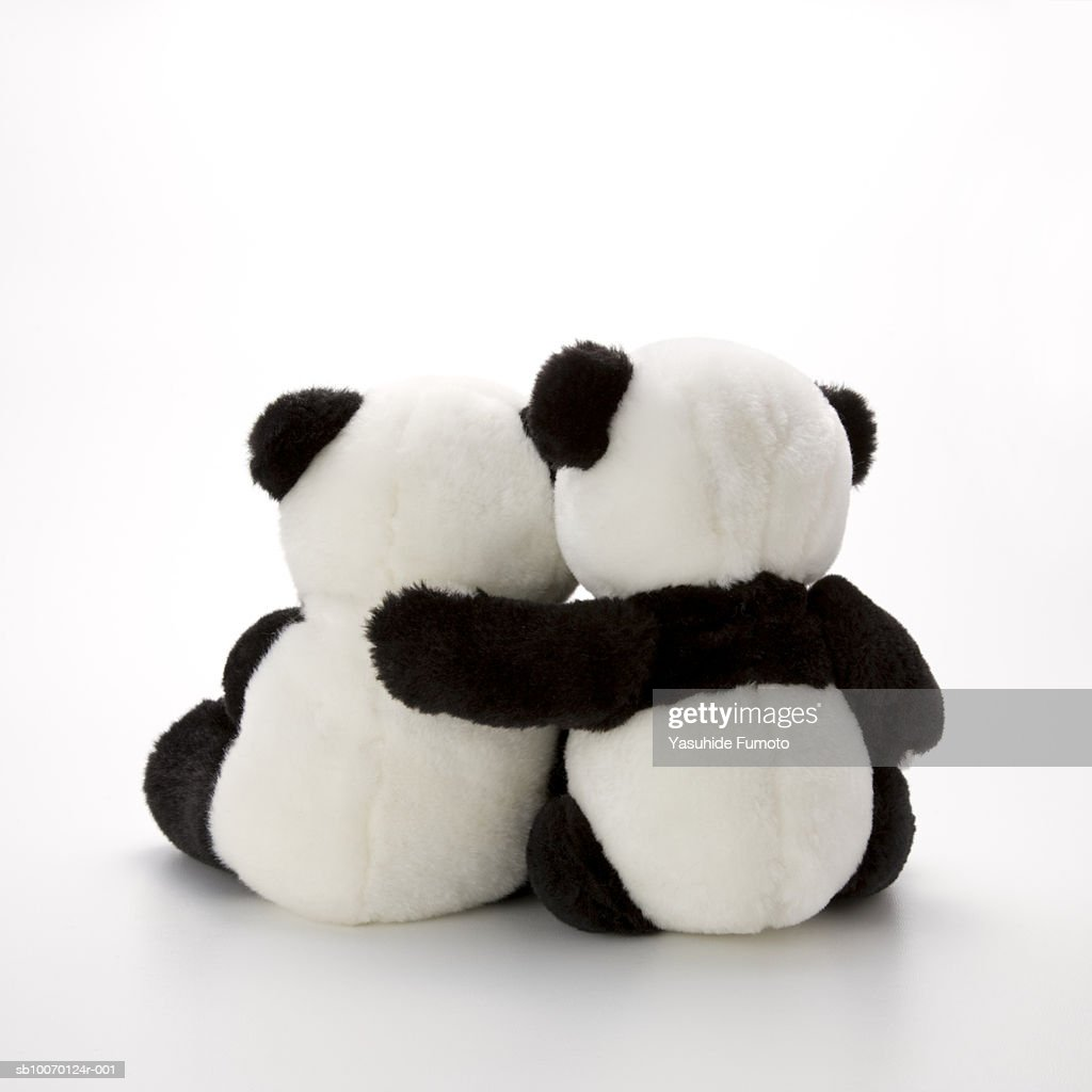 Two stuffed panda bear hugging, rear view, studio shot : Stock Photo