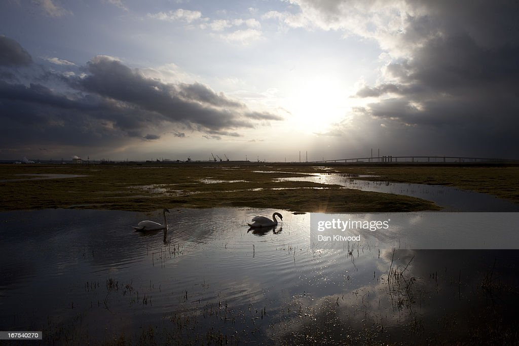 Two swans swim over Elmley Marshes on April 12, 2013 in Sheerness, England. The RSPB's Elmley Marshes lies on the Isle of Sheppy, and is managed by the Elmley Conservation Trust. The three and a half acre reserve has the highest density of breeding waders in southern England including Avocet and Redshank. The area is also known to be one of the best sites in the UK to view birds of prey which include Peregrine Falcon, Marsh and Hen Harriers, Rough Legged Buzzards and Short Eared Owl.