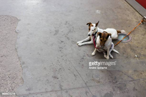 Two tied up dogs waiting outside