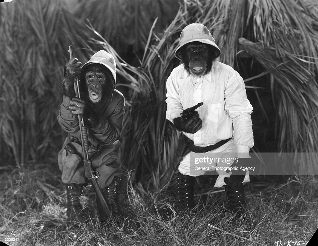 Two 'Tiffany Talking Chimps' dressed as big game hunters in the film 'Africa Squawks' directed by Connie Rasinski.