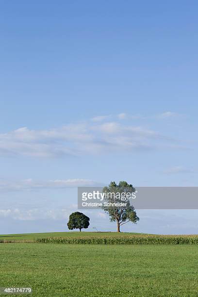 Two trees in field