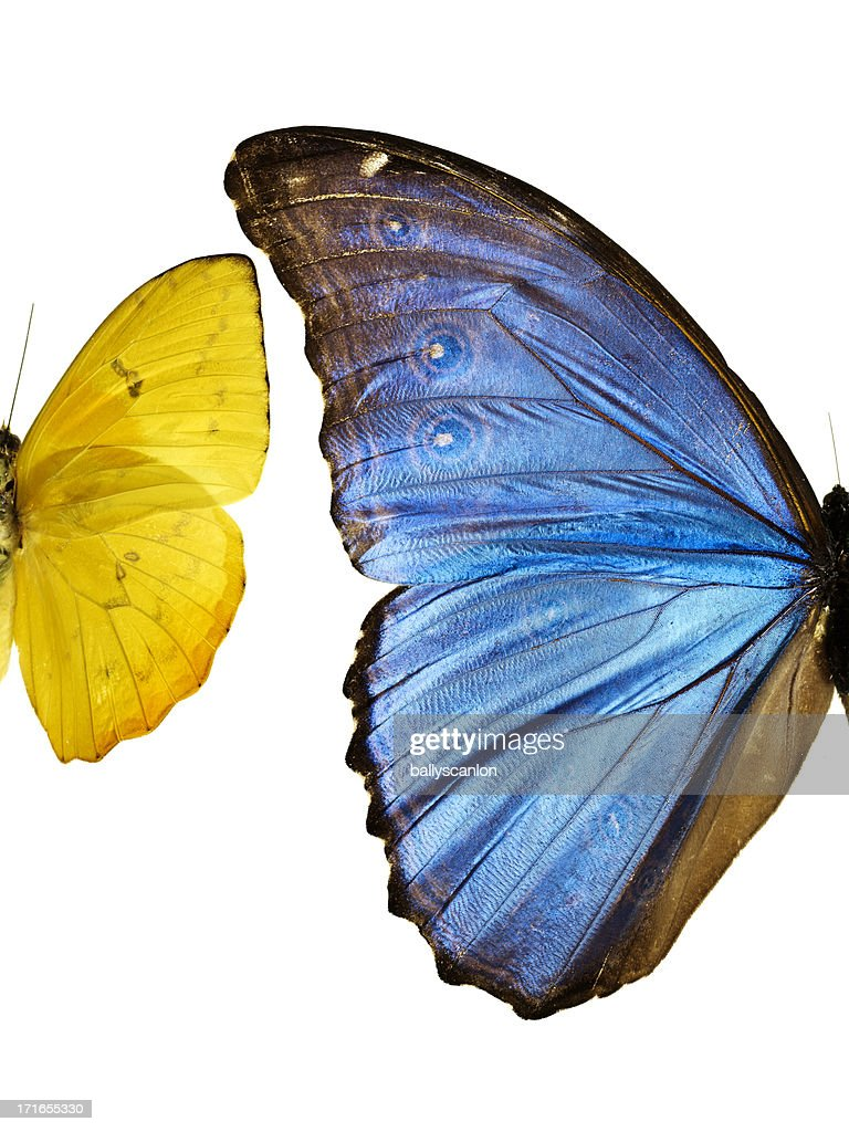 Two types of butterfliesside by side