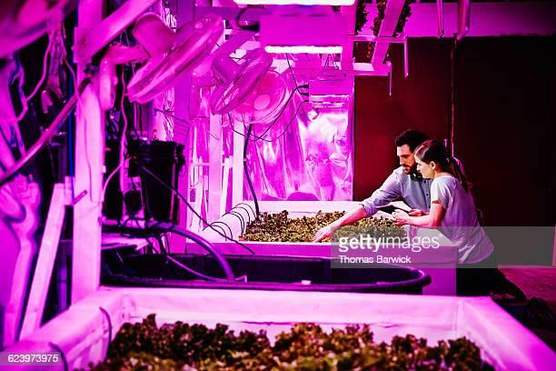 Two urban farmers kneeling next to bins of lettuce