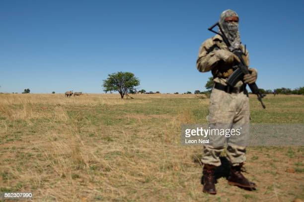 Two white rhino are seen in the distance as an armed guard patrols the area at the ranch of rhino breeder John Hume on October 16 2017 in the North...