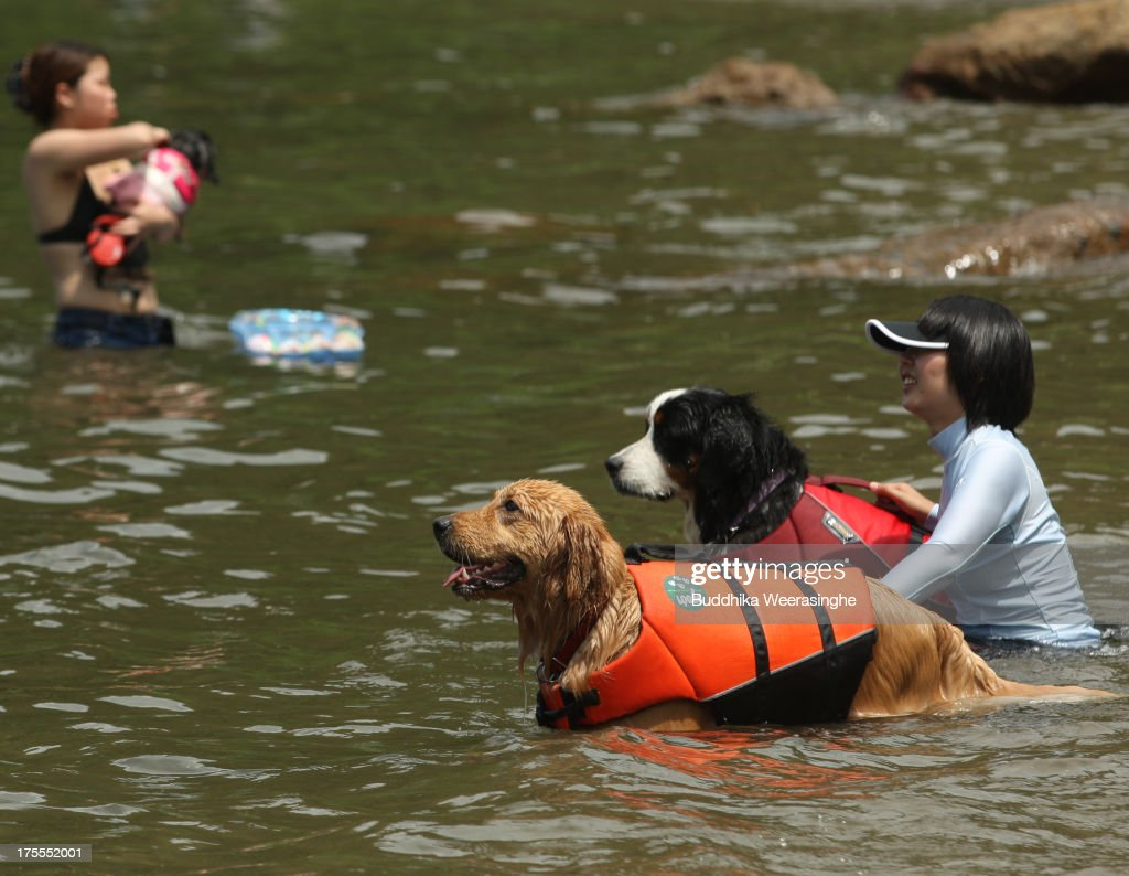 Two women bathe with their dogs at Takeno Beach on August 4, 2013 in Toyooka, Japan. This beach is open for dogs and their owners every summer between the months of June and September. .