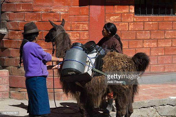 Two women delivering fresh milk with llama