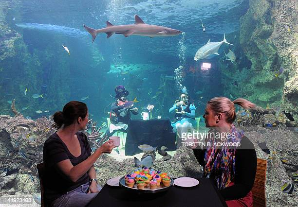 Two women enjoy a cup of tea as scuba divers Martin Garwood and Amanda Elzer dressed as characters from the Mad Hatter's Tea Party sit in a display...