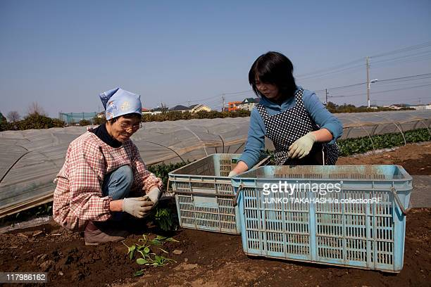 Two Women Harvesting Spinach