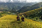 Two women on terraced rice fields, Mu Cang Chai, YenBai, Vietnam