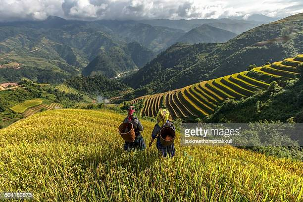 Two women on terraced rice fields, Mu Cang Chai, YenBai, Vietnam