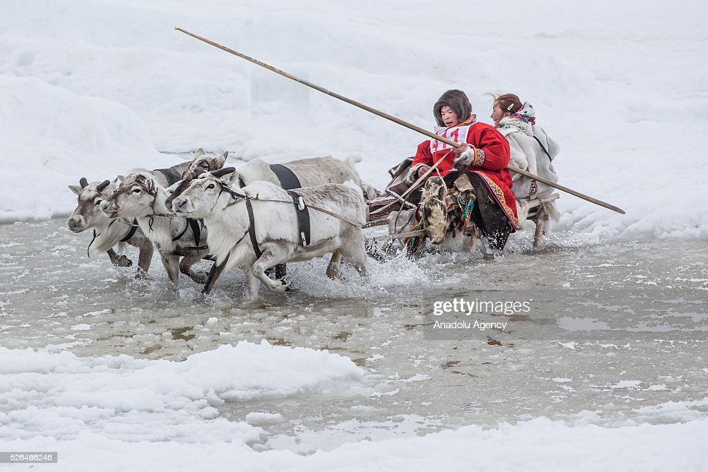Two women ride reindeers' sled in melting snow at the north of Yamal Gyda, the northernmost settlement of the Yamalo-Nenets Autonomous Okrug in Russia on April 27, 2016. Effects of global warming are seen more clearly every year as north gets warmer and spring comes sooner. This situation makes residents and reindeer harders' life very difficult.