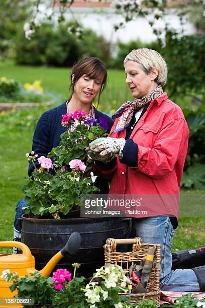 Two women setting flowers in pots, Sweden.