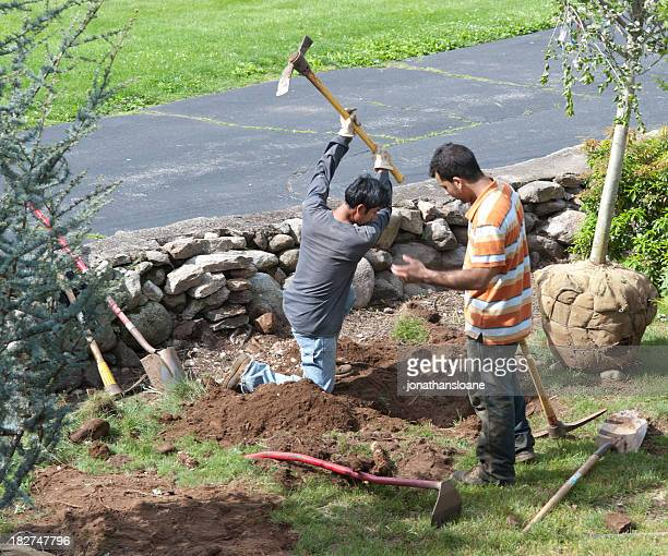 Two workers digging a hole to plant a tree