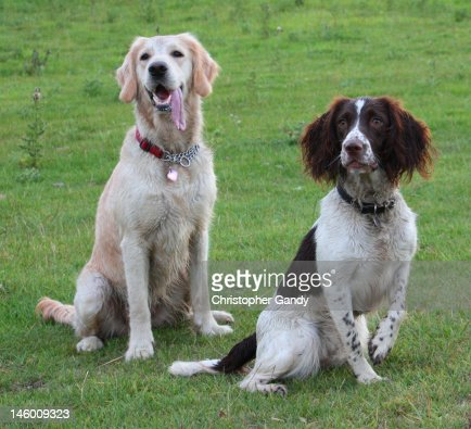 Two working dogs together
