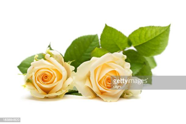 Two yellow roses with leaves