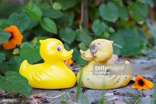Two yellow rubber ducks, lush foliage, flowers
