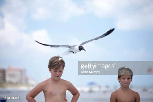 Two young boys feeding sea gulls at the beach : Stock Photo