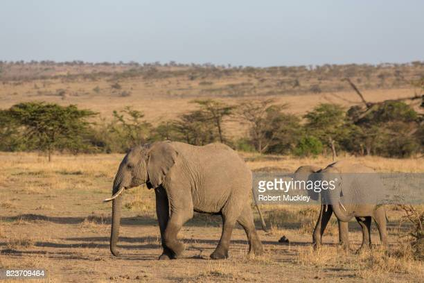 Two Young Elephant