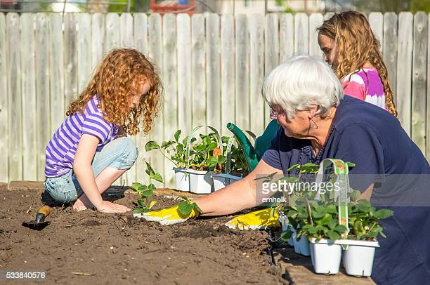 Two Young Girls Helping Grandma Plant Strawberries in Garden