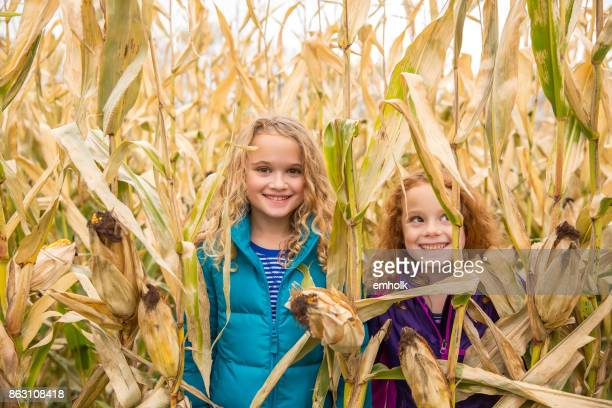 Two Young Girls In Corn Field
