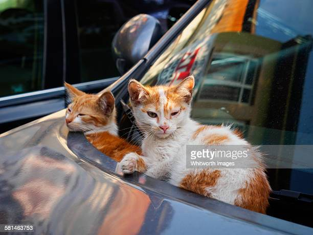 Two young kittens sitting on car in Turkey