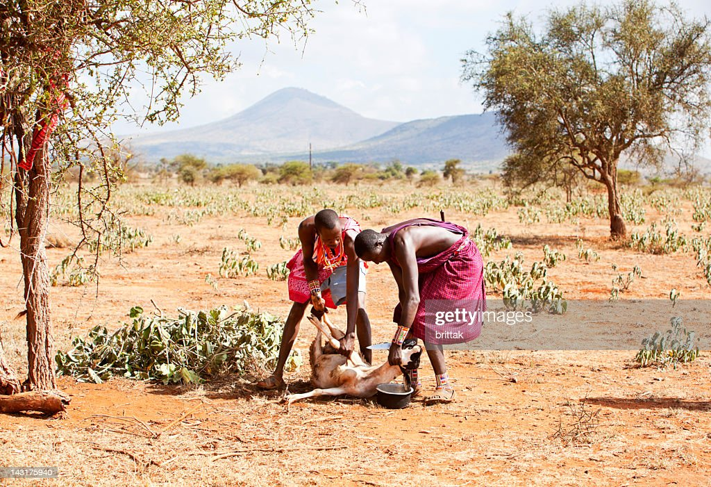 Two young masai ready to slaughter a goat. : Stock Photo