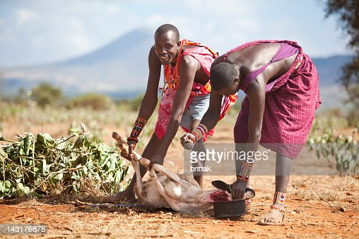 Two young masai slaughtering a goat. : Stock Photo