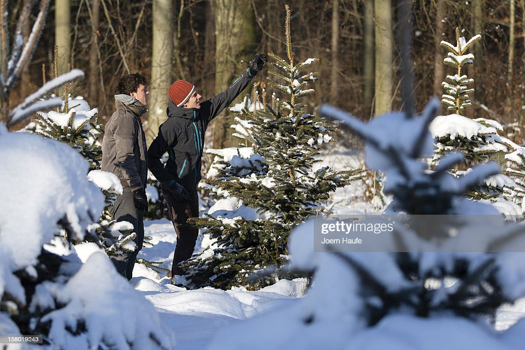 Two young men look at a Christmas tree in a plantation in a forest on December 8, 2012 in Fischbach, Germany. Forestry officials in the state of Saxony officially opened the 2012 Christmas tree season for people who want to retrieve their tree from designated forests rather than just buying it readily cut.