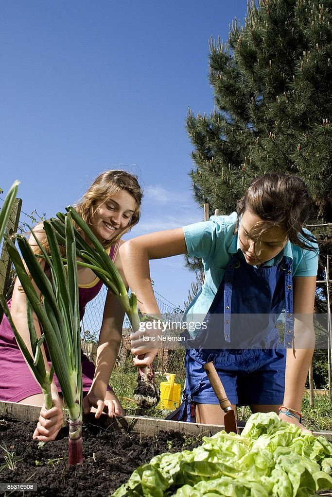 Two young women planting bulbs in their garden : Foto stock