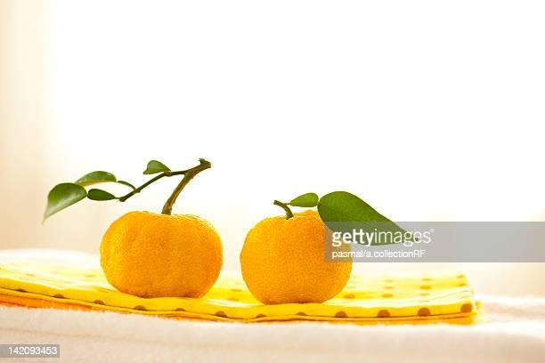Two Yuzu Citrus Fruits