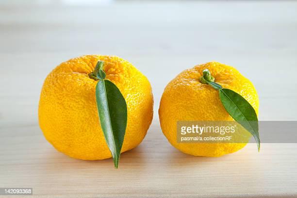 Two Yuzu Fruits