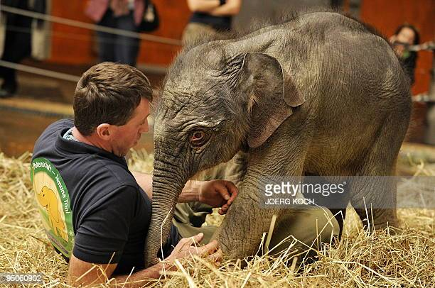 A twodayold baby elephant named 'Jamuna Toni' plays with a minder at her enclosure at Hellabrunn Zoo in the southern German city of Munich on...