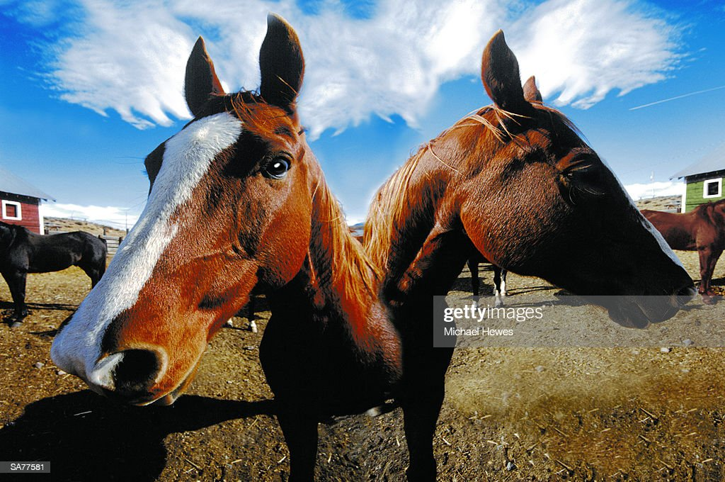 Twoheaded Horse Standing In Corral Stock Photo | Getty Images