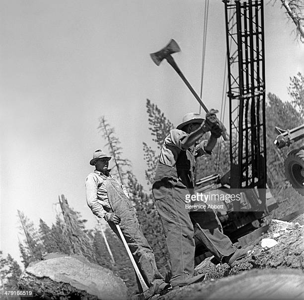 Twoman crew making final cuts on log United States circa 1950 Abbott took two series of logging photographs the first in the High Sierra Mountains in...