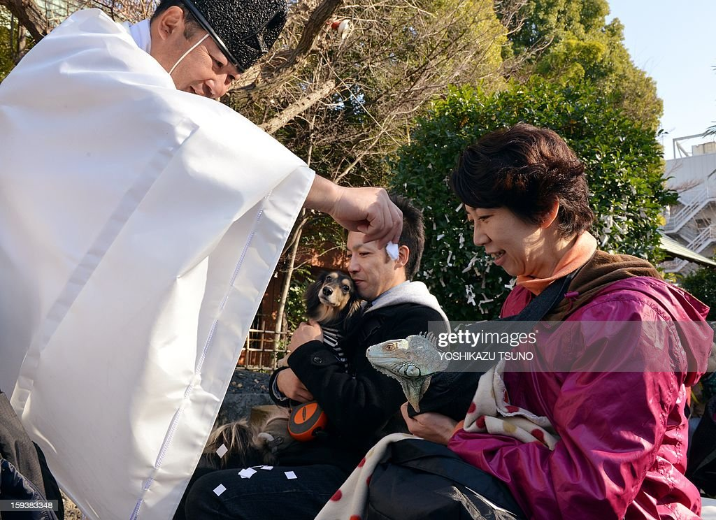 A two-year-old green iguana, held by its owner (R) is purified by a Shinto priest (L) at the Ichigaya Kamegaoka-Hachiman shrine in Tokyo on January 13, 2013. Some 500 pet owners visited the shrine to celebrate the New Year and pray for the health and happiness of their animals. AFP PHOTO / Yoshikazu TSUNO